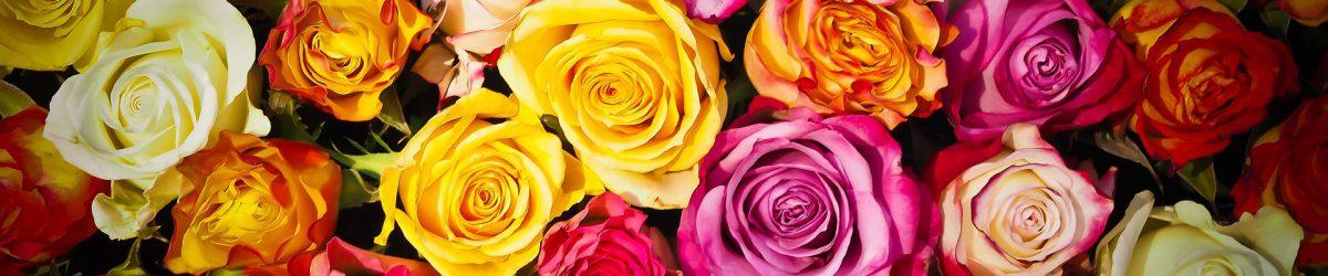 http://ausabotdevenus.com/wp-content/uploads/2017/02/roses-1229148_1920-1200x250.jpg